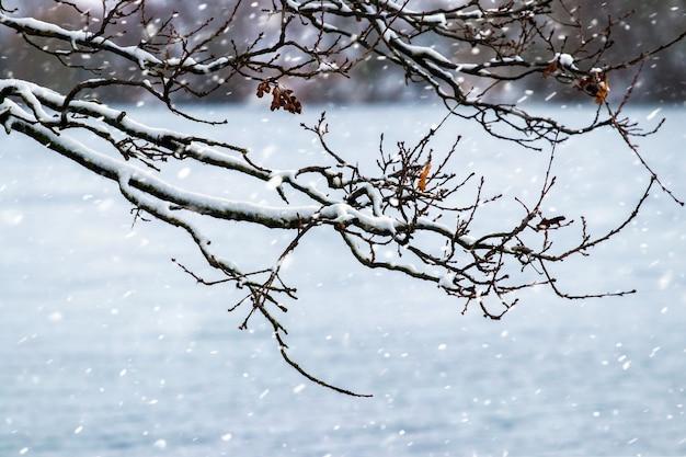Заснеженная ветка дерева у реки во время снегопада