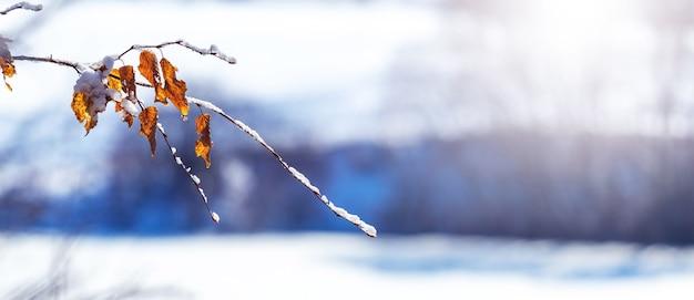 晴天時の川の近くの雪に覆われた木の枝