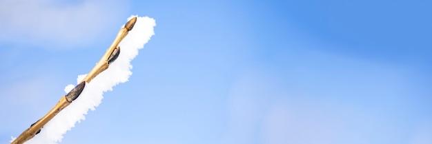 푸른 하늘 배경에 꽃 봉 오리와 눈 덮인 나뭇 가지.