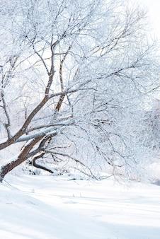 눈이 텍스트에 대 한 장소를 가진 하늘에 대 한 나뭇 가지를 다룹니다.