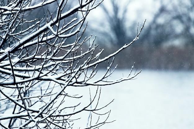 青い冷たい色調のぼやけた背景の森の雪に覆われた木の枝