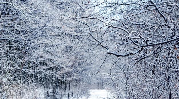숲에서 눈 덮인 나뭇가지입니다. 눈 덮인 나뭇가지의 겨울 패턴
