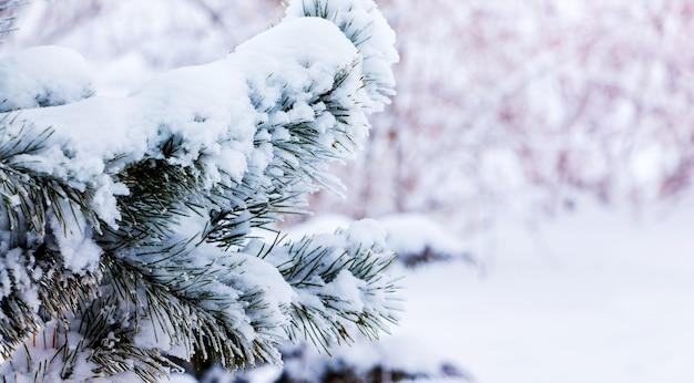 晴れた天気でぼやけた背景に雪に覆われた木の枝_