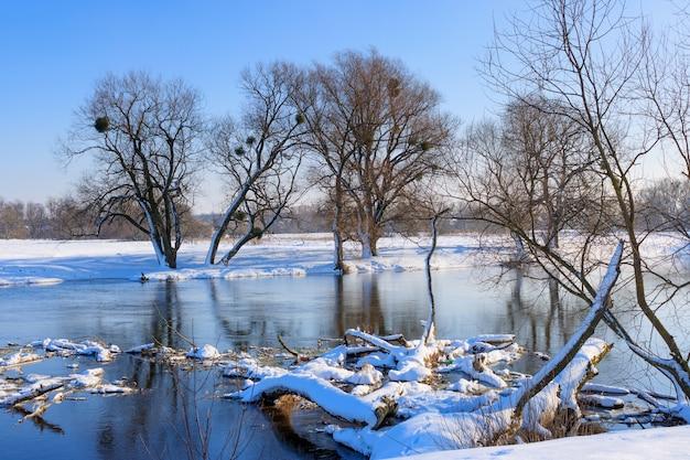 겨울 강 표면에 누워 눈 덮인 나무 줄기
