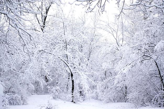 Заснеженные деревья и кусты в зимнем лесу