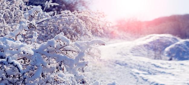 일출 동안 아침에 숲 근처에 눈 덮인 나무와 덤불. 겨울의 일출 또는 일몰