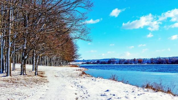 Заснеженные деревья у реки в солнечный день, зимний пейзаж