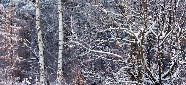 冬の森の雪に覆われた木のクローズアップ。冬の風景_