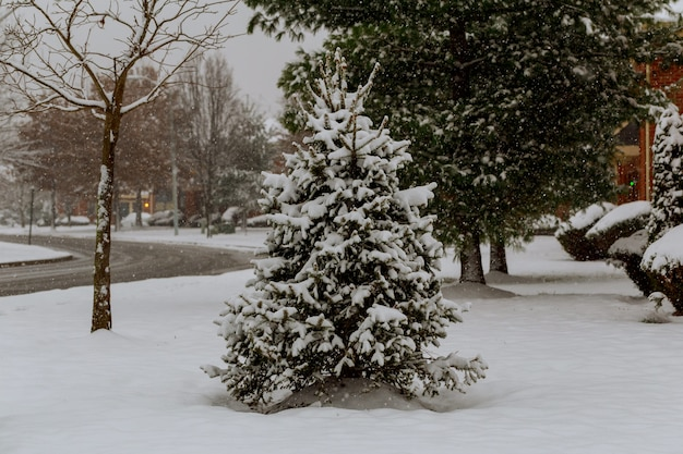 Snow covered trees and falling snow