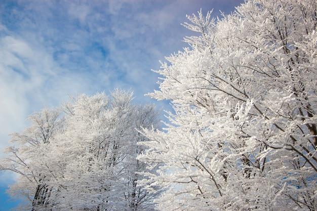 Заснеженные деревья в горах на закате. красивый зимний пейзаж.