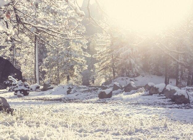 겨울 숲에서 눈 덮인 나무