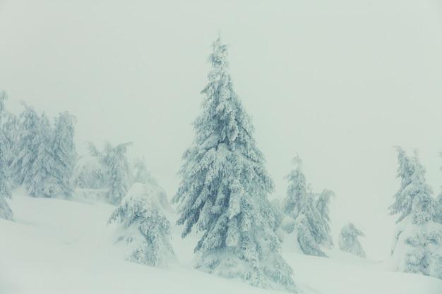 Заснеженные деревья в зимнем лесу