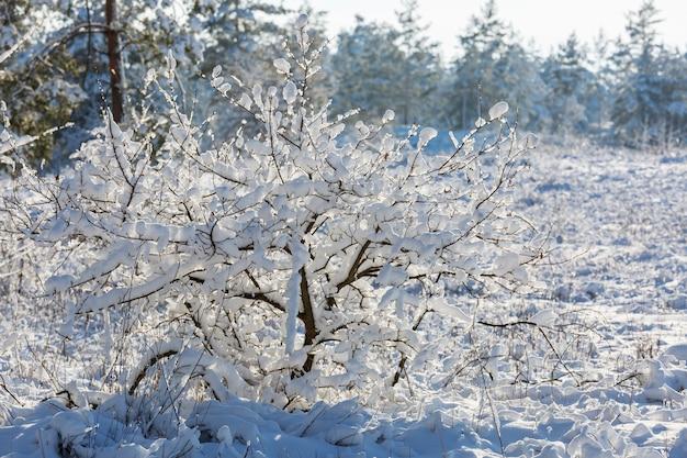 冬の森の雪に覆われた木