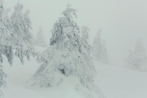 Заснеженные деревья в зимних горах.