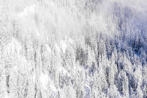 Заснеженные деревья в горах запечатлены в пасмурный день