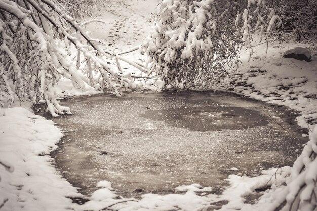 눈 덮인 나무는 겨울 필터, 효과에 숲을 심습니다. 자연 겨울 크리스마스 새 해 배경입니다. 우드랜드 눈 아래.