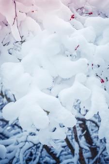 눈 덮인 나무는 겨울 필터, 효과에 숲을 심습니다.