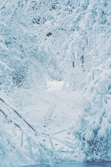 겨울 필터에 눈 덮인 나무 식물 숲