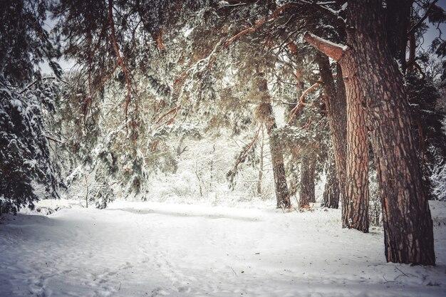 눈 덮인 나무는 겨울에 숲을 심습니다.