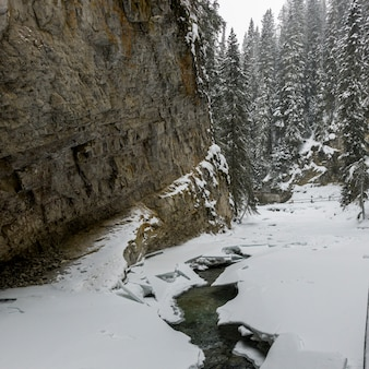 Snow covered trees and a stream in canyon, johnston canyon, banff national park, alberta, canada