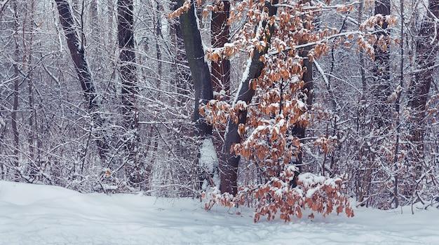 겨울 숲에 마른 잎이 있는 눈 덮인 나무. 겨울 풍경_