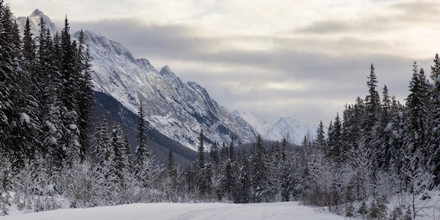 Snow covered trees with mountain in the background, maligne lake, jasper, jasper national park, albe
