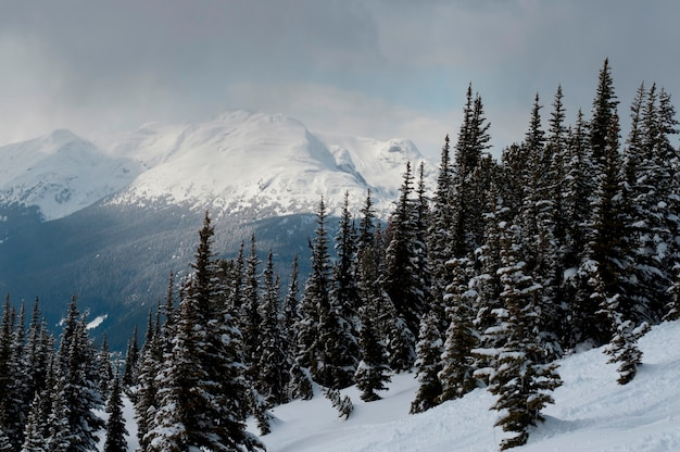 Snow covered trees with mountains, whistler, british columbia, canada