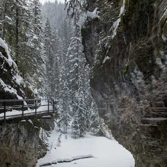 Snow covered trees with trail in forest, johnston canyon, banff national park, alberta, canada