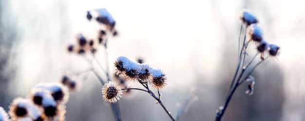 아침 안개 속에서 겨울에 눈 덮인 잡초
