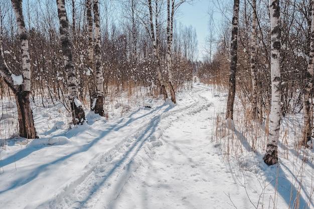 Заснеженная извилистая тропа скрывается за деревьями.