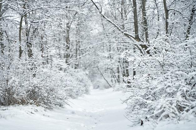 Заснеженный зимний лесной пейзаж. зимняя сказка