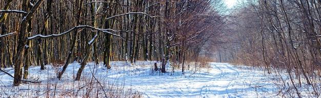 晴天、パノラマで裸の木と雪に覆われた冬の森