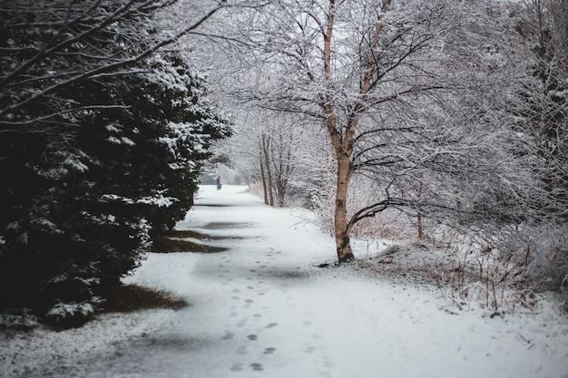 Снег покрывает деревья и дороги