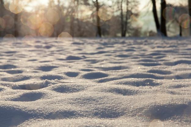 冬の森に雪が漂う