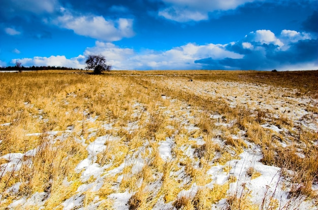 Snow and field