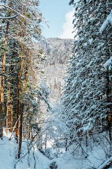 Снежный лес в японии