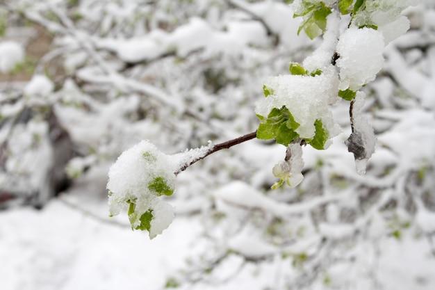 Весной резко выпал снег.