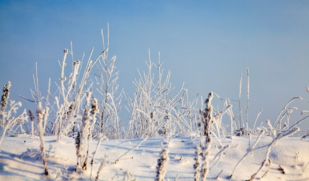 Snow and ice covered dead grass in winter season, beautiful nature and specific features of winter weather in the wild, blue sky and sunny weather