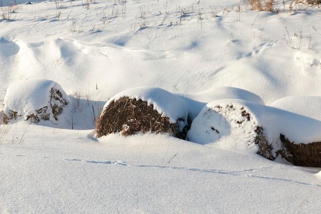 冬の雪は凍って寒く、降雪と吹雪の後の自然、冬の柔らかい雪の深い漂流