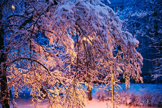 冬の夜の木に雪が降る Premium写真