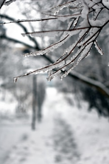 겨울에 공원의 나뭇가지에 눈