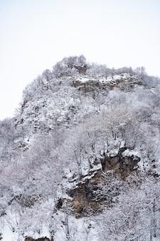 降雪後の木の枝に雪が降る