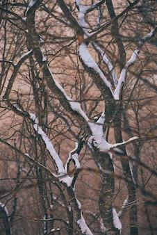 日没時に木の枝に雪が降る