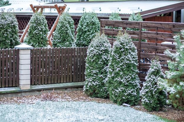 Снег на деревянной палубе и заборе с вечнозелеными растениями в фоновом режиме