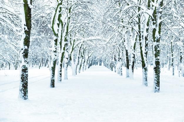 中央の路地に白い木があるスノーパーク