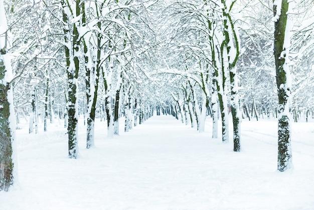 Снежный парк с белыми деревьями на центральной аллее