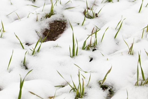 눈이 내린 후 나타난 겨울철에 촬영 된 눈, 클로즈업,