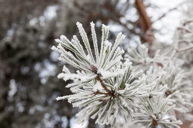 Снег сфотографировал в зимнее время года, появившийся после снегопада. крупный план