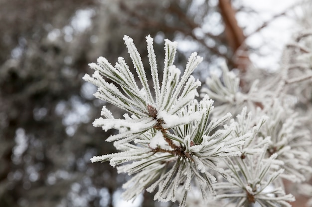 Snow photographed in the winter season, which appeared after a snowfall. close-up,