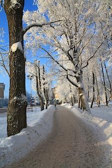 Снежное дерево в городском парке